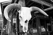 The skull of a bull with horns on the outside of a store along Route 66. Missoula Photographer