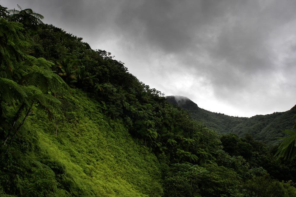 The El Yunque rain forest in Puerto Rico.