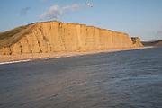 Golden afternoon light on sandstone cliffs, East Cliffs, West Bay, Bridport, Dorset, England, UK