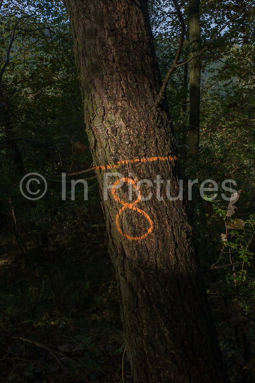 The number 8 has been sprayed in aerosol on to a tree bark to identify its location in an English wood. Sunlight is pouring on to this remote corner of woodland on the lower slopes of Sutton Bank, North Yorkshire, on the edge of the North Yorks Moors National Park. Foresters often ID chosen trees for felling or for marking boundaries.