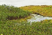 Permanent Lake near Karasabai in Pakaraima Mountains.<br /> Rupununi<br /> GUYANA<br /> South America