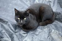 Gato negro sobre manta plastica.