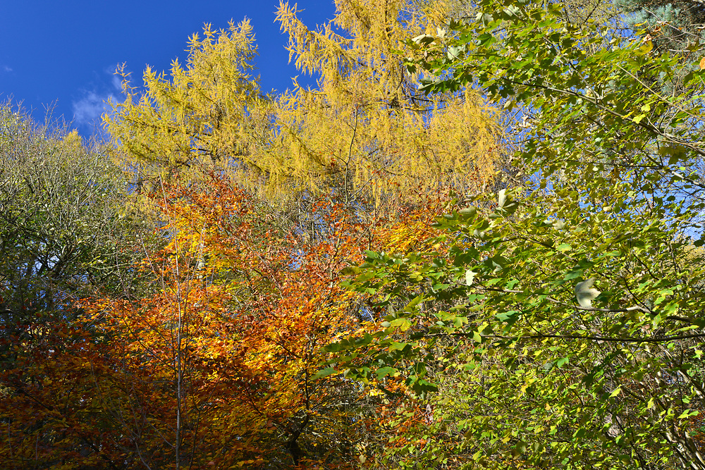 Mixed woodland autumn colour, Stoke Wood, Oxfordshire.