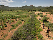Kanga, Mahiya and Ngosha leaving for hunting, passing corn fields that used to be forest with wildlife 2 years ago. At and near the Hadza camp of Dedauko.