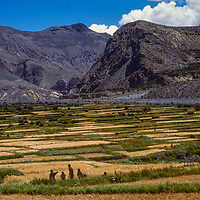 Barley fields in the rain shadow of the Himalaya, Nepal