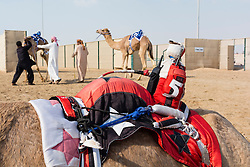 Remote controlled robot jockey at camel racing club at Al Marmoum outside Dubai  in United Arab Emirates