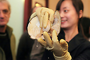 China, Beijing, woman working in a pearl factory showroom. Showing the natural pearl to visitors