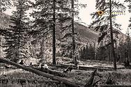Hanging around the campfire in the Bob Marshall Wilderness, Montana, USA