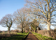 Landscape of long straight road passing trees in winter, Sutton, Suffolk, England