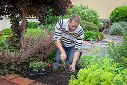 Planting out summer bedding in a border