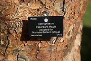 Tree species identification label, National arboretum, Westonbirt arboretum, Gloucestershire, England, UK - Acer griseum, paperbark maple
