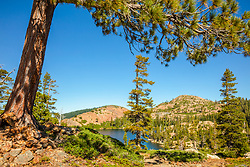 """""""Penner Lake 1"""" - Photograph of a tree at Penner Lake in the back country of the Tahoe National Forest."""