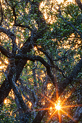 Sunset behind dense trees, Hill Country between Blanco and Fredericksburg, Texas, USA