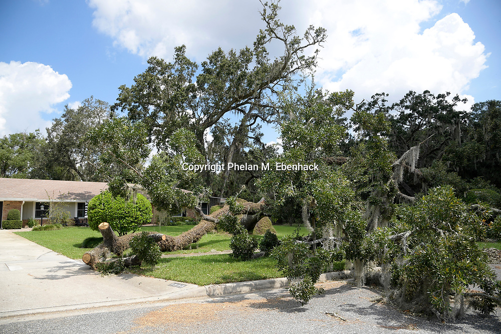 A tree blown down during Hurricane Irma sits in front of a home Thursday, Sept. 14, 2017, in Orlando, Fla. (Photo by Phelan M. Ebenhack)