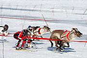 Reindeer racing, Inari, Lapland, Finland