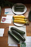 Courgettes vegetable show contest winner, Butley, Suffolk, England, UK