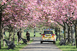 © Licensed to London News Pictures. 09/04/2020. London, UK. Police officers speak to members of the public beneath a row of cherry blossom in Greenwich Park. The government has asked that people continue to remain indoors over the Easter Weekend. Photo credit: Rob Pinney/LNP