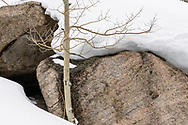 Aspen, rocks and deep snow, Glacier Gorge RMNP