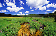 Lost Trail Creek below Gibbons Pass in summer. Beaverhead National Forest, southwest Montana