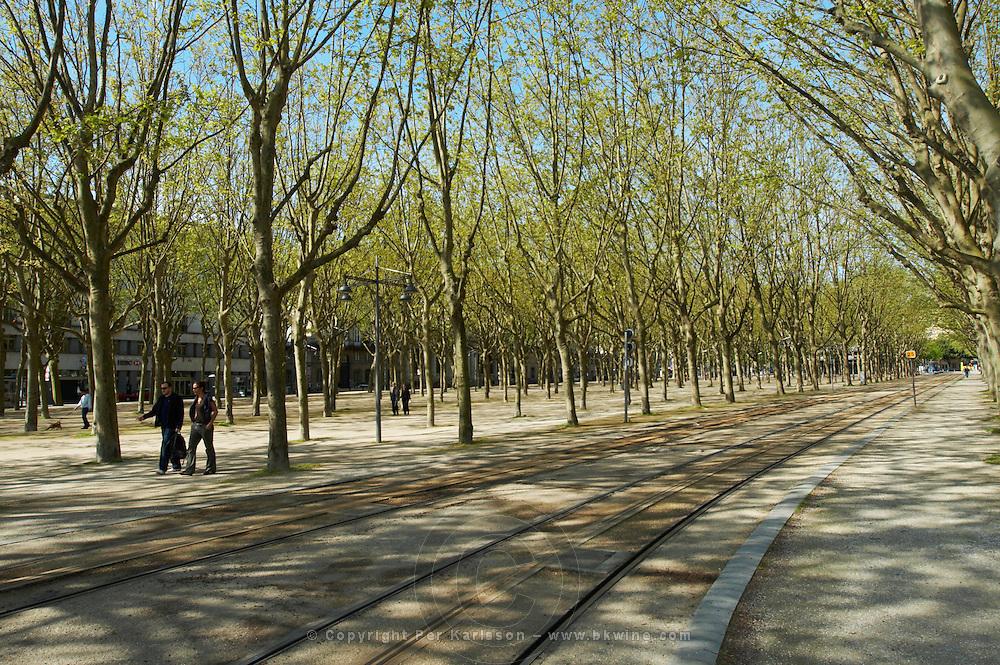 esplanade des quinconces plane trees tram tracks bordeaux france