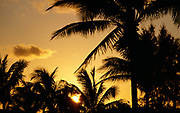 Palm trees at sunset in the tropics