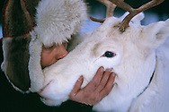 Mikael Vinka and his favourite reindeer, Ammarnäs, Sweden