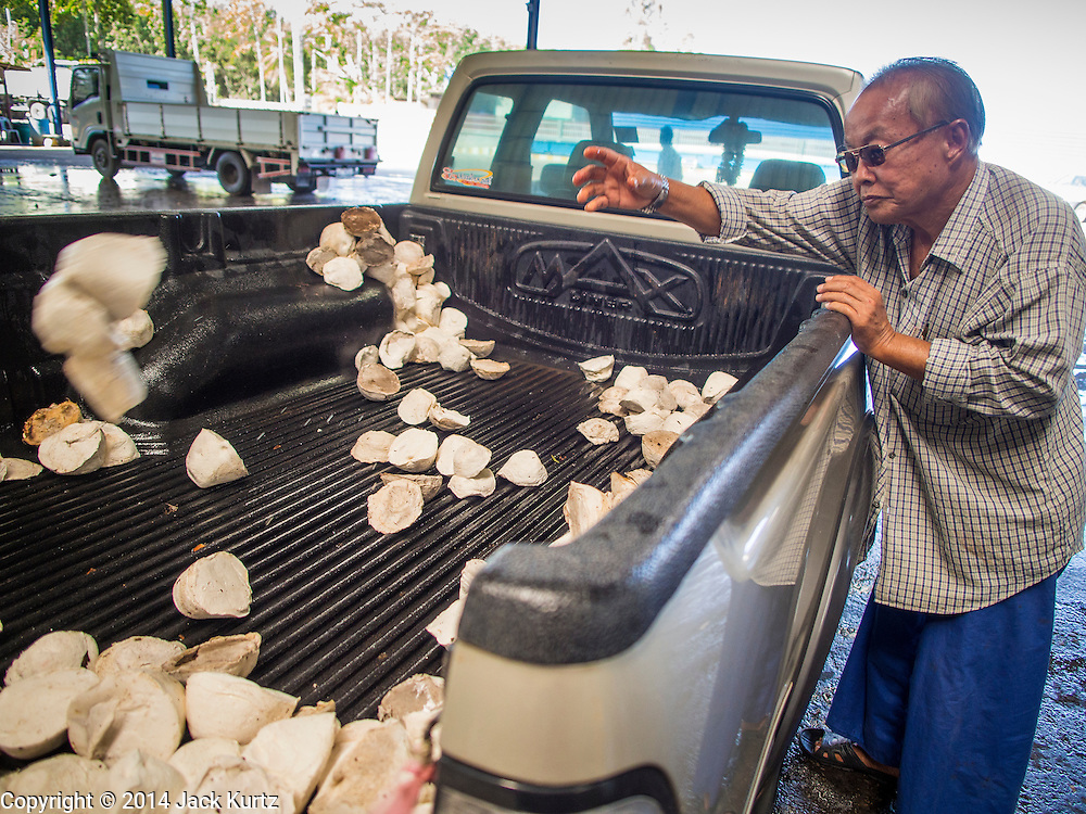 """15 DECEMBER 2014 - CHUM SAENG, RAYONG, THAILAND: A farmer throws raw latex out of the back of his pickup truck at a rubber buying station in Chum Saeng, Thailand. Thailand is the second leading rubber exporter in the world. In the last two years, the price paid to rubber farmers has plunged from approximately 190 Baht per kilo (about $6.10 US) to 45 Baht per kilo (about $1.20 US). It costs about 65 Baht per kilo to produce rubber ($2.05 US). Prices have plunged 5 percent since September, when rubber was about 52Baht per kilo. Some rubber farmers have taken jobs in the construction trade or in Bangkok to provide for their families during the slump. The Thai government recently announced a """"Rubber Fund"""" to assist small farm owners but said prices won't rebound until production is cut and world demand for rubber picks up.     PHOTO BY JACK KURTZ"""