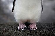 Antarctica: Tourism in Antarctica