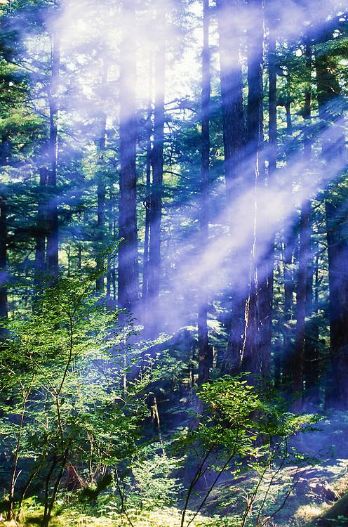 Alaska. Sunrays through the trees.