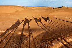 Shadows on dunes of camel caravan, Erg Chebbi, Saharan Desert, Morocco