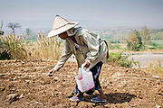 """25 FEBRUARY 2008 -- MAE SOT, TAK, THAILAND: Burmese migrant farm workers plant corn on a farm owned by a Thai farmer near Mae Sot, Thailand. One of the workers said all of the farm workers in the area were Burmese because Thais wouldn't do the work. There are millions of Burmese migrant workers and refugees living in Thailand. Many live in refugee camps along the Thai-Burma (Myanmar) border, but most live in Thailand as illegal immigrants. They don't have papers and can not live, work or travel in Thailand but they do so """"under the radar"""" by either avoiding Thai officials or paying bribes to stay in the country. Most have fled political persecution in Burma but many are simply in search of a better life and greater economic opportunity.  Photo by Jack Kurtz/ZUMA Press"""