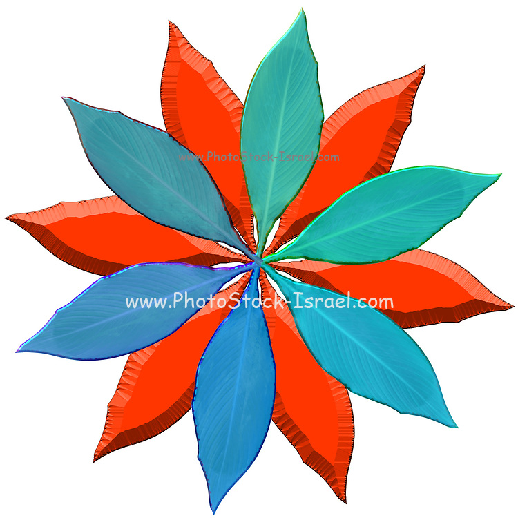 Digitally enhanced image of 12 colourful leaves arranged in a circular design