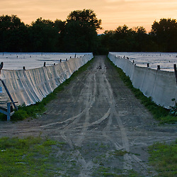 Tents cover a field of shade-grown tobacco in Hadley, Masaschusetts.