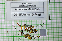 Low Grow Wildflower Mixture seeds from American Meadows. Image taken with a Fuji X-H1 camera and 80 mm f/2.8 macro lens + 1.4x teleconverter