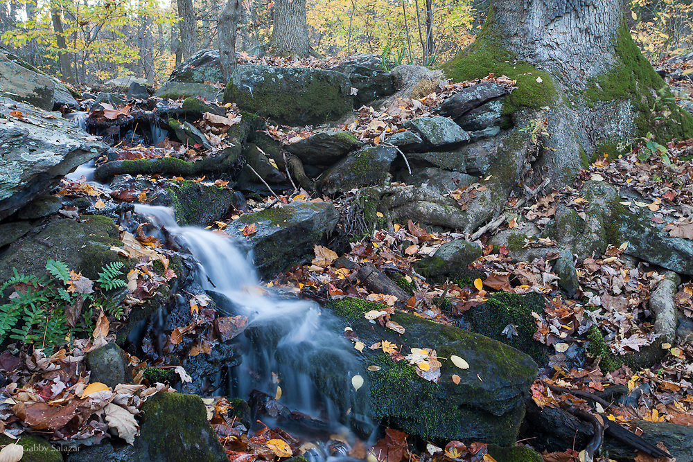 Delaware Water Gap Recreation Area in Pennsylvania near Portland, Pennsylvania during the fall.