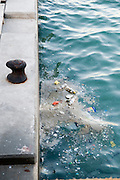 Israel, Tel Aviv, The old port, filth and garbage floating in the water