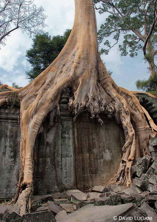 Ta Prohm was constructed under the Khmer King Jayavarman VII and dedicated to his mother.