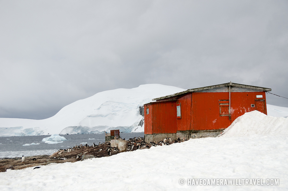 Nesting Gentoo penguins congregate in the lee of an Argentinian refuge hut at Mikkelsen Harbour on Trinity Island just off the Antarctic Peninsula. Remnants of the old whaling days are scattered around the hut, including old barrels, and old boat, and a whale skeleton.