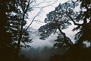 """""""Las nieves danzan en los aullidos del viento.<br /> <br /> Los árboles retorcidos bajo sus llantos.<br /> <br /> El invierno abriga la asamblea en el bosque"""".<br /> <br /> <br /> Memorias de Pucón / Pucón, Chile.<br /> <br /> Edición de 25   Víctor Santamaría."""