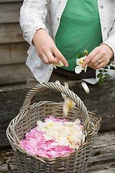 Making rose petal confetti