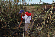 """Eder Loría, 30, from Xaibé, cuts sugar cane at the plot of local BSCFA member Leocadio Hoy. Eder, who is currently on his second season cutting sugar cane for BSCFA members, states: """"Before I worked a the papaya plantation in Corozal, but they mistreated us. Here, the BSCFA has different work standards and it is much better for us worker."""" Belize Sugar Cane Farmers Association (BSCFA), Xaibé, Corozal, Belize. January 22, 2013."""