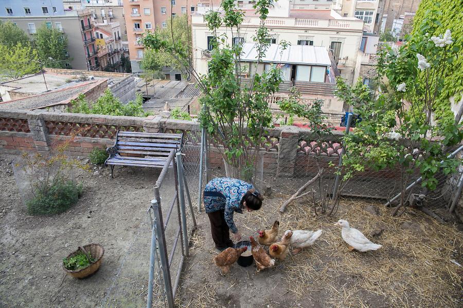 /ES/ Carmen en el gallinero de su casa a pocos metros del barullo de la ciudad.