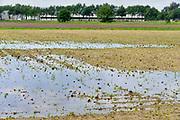 Nederland, the Netherlands, Wanroy, 23-5-2018Waterplassen en verdronken land in de omgeving van Boxmeer door de zeer plaatselijke, lokale, hoosbuien van de afgelopen weken. Een grote schadepost voor de akkerbouwersFoto: Flip Franssen