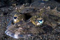 Crocodile Flathead with Elaborate Eyelashes and Eyeflaps