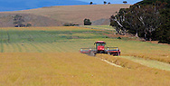 Crop harvesting, rural Victoria.<br /> <br /> For larger JPEGs and TIFF versions contact EFFECTIVE WORKING IMAGE via our contact page at : www.photography4business.com