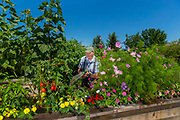 Gardening at Attic Angel. (Photo © Andy Manis)