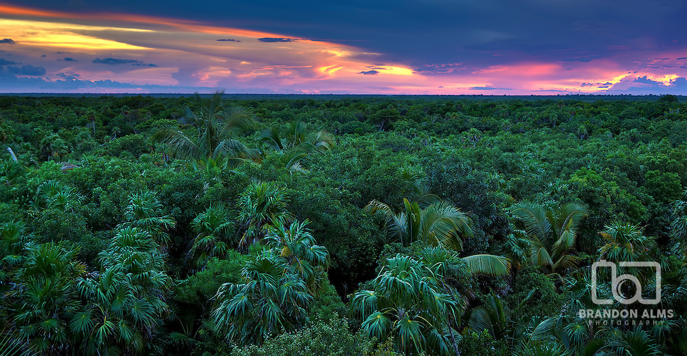 A sunsetting horizon over the top of a jungle.