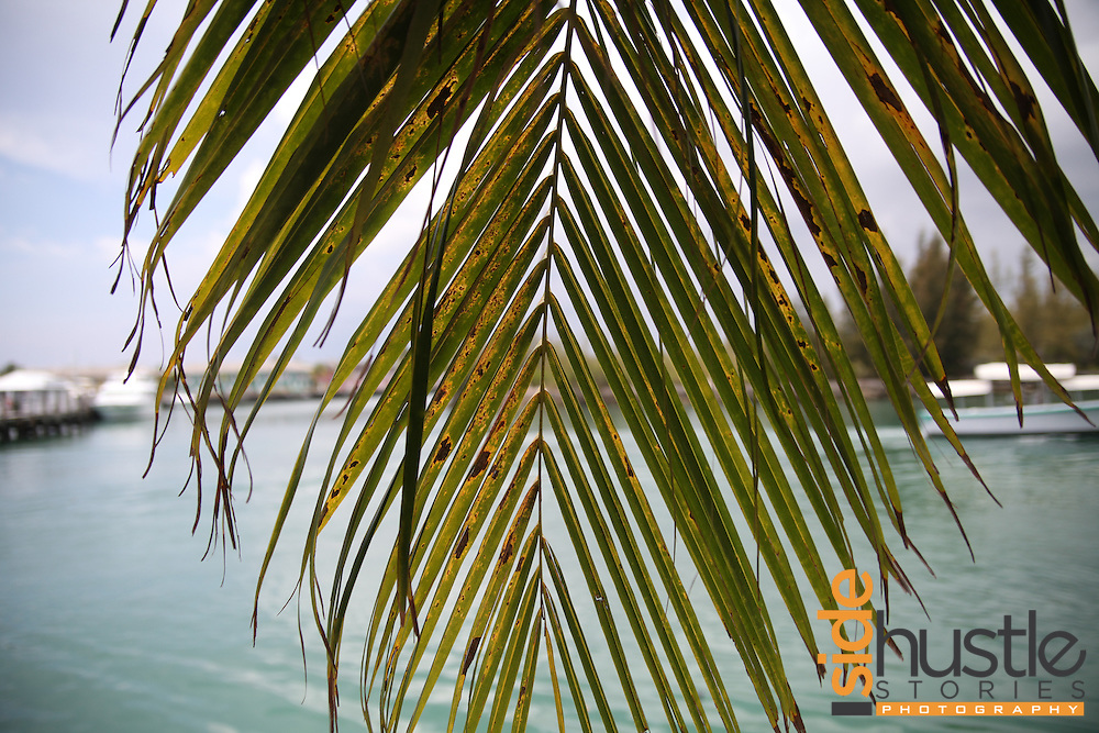 A few photos from a trip to Freeport, Grand Bahama