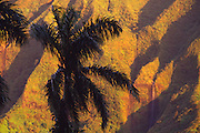 Palm tree against Ko'olau Mountains, Oahu, Hawaii<br />