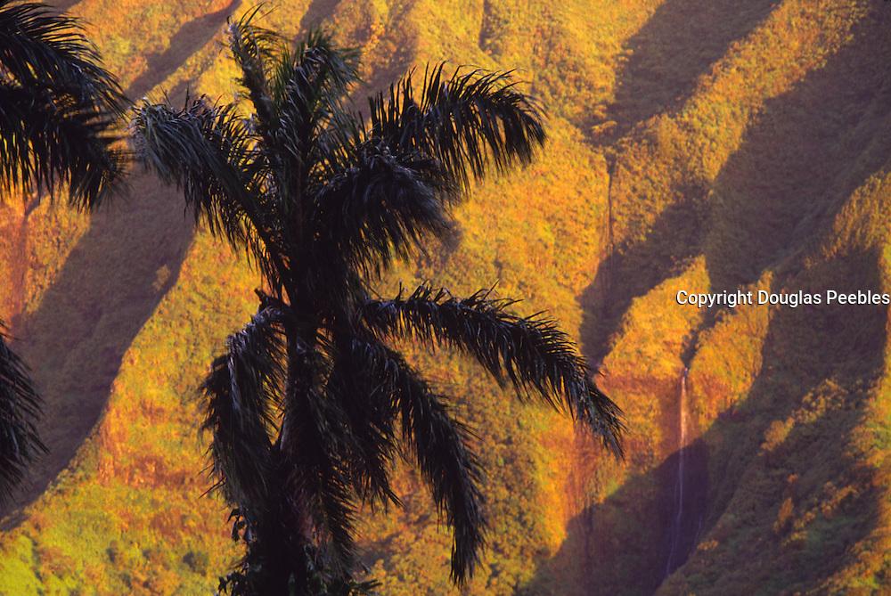 Palm tree against Ko'olau Mountains, Oahu, Hawaii<br />